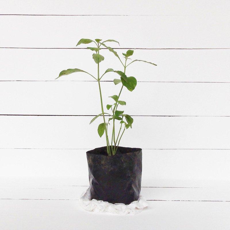 dto motorsport tree planting